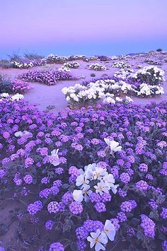 ✿⊱╮Natural elements: Purple paradise.