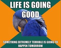 The Story of my life!   Paranoid Parrot