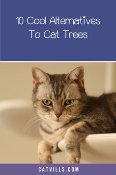 As a cat owner, you know the love-hate relationship with cat trees. You love them because they keep your cat entertained, happy, and away from your furniture. At the same time, you hate cat trees because they take up space and aren't exactly nice to look at!