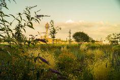 Stadtspaziergang: Sonnwendviertel | Stadtbekannt Wien | Das Wiener Online Magazin Online Magazine, Vienna, Vineyard, Places To Go, Country Roads, Celestial, Sunset, Outdoor, Road Trip Destinations
