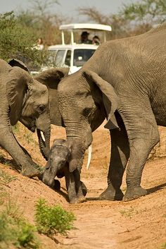 Elephant love, this is real team work within a family. People could really leans something by just watching these amazing animals. For as large as their are, they are so gentle. Animals And Pets, Baby Animals, Funny Animals, Cute Animals, Wild Animals, Elephants Never Forget, Save The Elephants, Baby Elephants, Baby Hippo