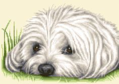 MALTESE dog complete counted cross stitch kit *STUNNING