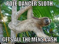 THE POLE IS NO PLACE FOR YOU, SLOTH!