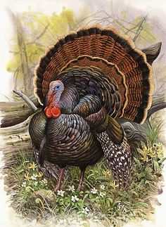 Turkeys eat in the Field - It's Turkey Time and we have lots of learning projects in mind. Hands-on learning activities with a turkey theme...  http://www.squidoo.com/turkey-time