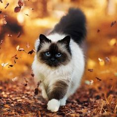 Imagen de cat, autumn, and fall