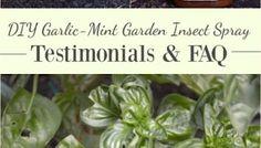 DIY Garlic-Mint Garden Insect Spray Testimonials & FAQs