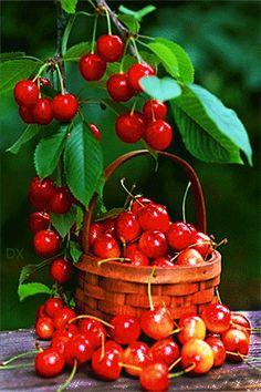 Cherry - Animation Telefon №1374916