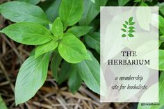 A review of the Herbarium a membership site for herbalists