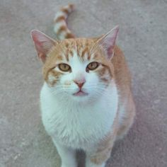 LION - Gato adoptado - AsoKa el Grande