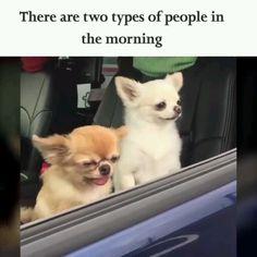 funny dog memes videos ~ funny dog memes ` funny dog memes hilarious ` funny dog memes humor ` funny dog memes videos ` funny dog memes puppies ` funny dog memes with captions ` funny dog memes hilarious laughing ` funny dog memes hilarious humor Cute Animal Memes, Funny Animal Quotes, Animal Jokes, Cute Funny Animals, Cute Baby Animals, Funny Cute, Hilarious Animal Memes, Funny Animal Humour, Clean Animal Memes