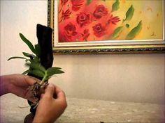 Cultivo de orquídea em toco - YouTube