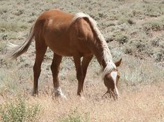 Wild Horse at Geiger Pass, Nevada a few miles southeast of Reno. (pinned by haw-creek.com)