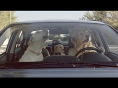 Subaru Dog Tested: What's the Fuss About?