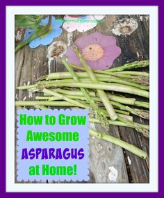 How to Grow Awesome Asparagus at Home! Perennial Vegetables, Planting Vegetables, Vegetable Gardening, Eco Garden, Garden Pests, Garden Ideas, Growing Veggies, Growing Herbs, Gardening For Beginners