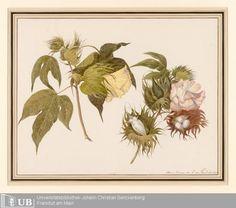 Louise von Panhuys, Cotton / Baumwolle, 1811.