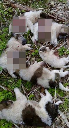Σοκ προκάλεσαν οι εικόνες με τα επτά κουτάβια που κάποιος πυροβόλησε και σκότωσε – Το περιστατικό έγινε χθες στην Κλείσοβα Μεσολογγίου – Έρευνες της αστυνομίας για τον εντοπισμό του δράστη Kai, Chicken