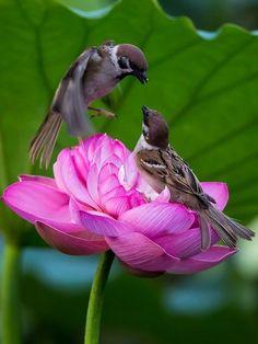birds on a lotus blossom
