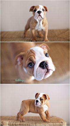 Minion-Love Bulldogs