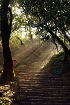 Stairway of hope... Morning Sun-rays enters through the tree and reach till the ladders. Location: Sundarijal (Beautiful water), Nepal