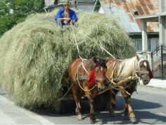 Poland Country, Poland Travel, Good Old Times, Farm Art, Warsaw Poland, Horse Drawn, Retro, Eagles, Childhood Memories