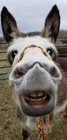 Panchatantra Stories in hindi / हिंदी पंचतंत्र की १४ खूबसूरत कहानियां Happy Animals, Cute Funny Animals, Cute Baby Animals, Farm Animals, Animals And Pets, Wild Animals, Donkey Funny, Cute Donkey, Laughing Animals