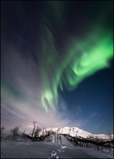 Aurora BorealisThe lonely walk by *Trichardsen :)
