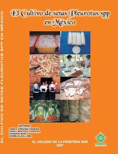 """El cultivo de setas Pleurotus spp en México  En México, los hongos comestibles cultivados del género Pleurotus son conocidos con el nombre comercial de """"setas"""", incluyendo sus respectivos barbarismos, tales como """"zetas"""", """"hongo seta"""" y """"hongo zeta"""". El término se ha arraigado tanto en la población que, por ejemplo, ha surgido el término """"setero"""" para referirse a la persona que produce, distribuye o vende setas, en similitud con el término """"champiñonero"""", asignado a todo aquel involucrado en…"""