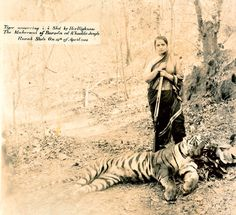 Maharani Chimnabai II (1871-1958) OF Baroda, 13 APRIL 1908 Women in royal households took active part in shikars, though unlike men, they continued to wear their native costumes for outdoor activities. Here the Maharani is seen wearing a traditional nine-yard Maratha sari and posing with her kill — a tiger measuring nearly nine feet.