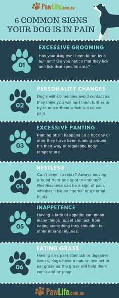 The common signs your dog is in pain can be easier to notice once you know what you are looking for. It's never easy seeing your furbaby in pain.