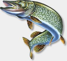 Image from http://www.total-fishing.com/files/totalfishing/Assets/Images/Fish_icons/pike1.jpg.