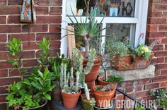 A Tour of My Cactus and Succulent Table