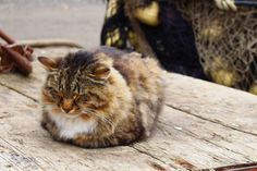 #adorable #cat #comfort #outdoor #relaxed #sleeping