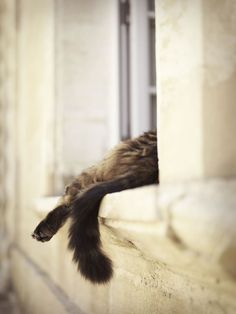 Official website for Internationally acclaimed Photographer Rachael Hale Mckenna, showcasing the body of work of Rachael's award winning images and best selling book titles including The French Cat, The French Dog, Lunch in Provence, and soon The New York Dog.