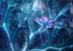 Motyl, Niebieska, Roślina, Makro