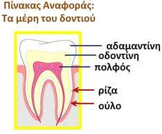 Dental Health, Kids And Parenting, Baby Kids, Pregnancy, Greek, Education, Halloween, Tips, Blog
