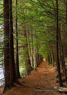 Goose Pond Trail, Keene, NH. I used to run there with my friend Jesse.