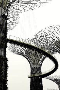 Iron Tree (Vertical Gardens, Marina Bay, Singapore) by Grant Associates