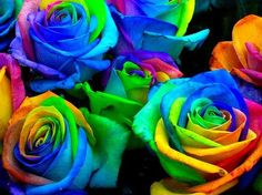 Weird Stuff We Found Online: Rainbow roses!