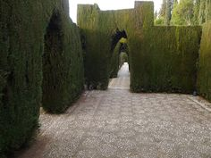 Beautiful! The Generalife from Carmen de la Victoria in the Albayzin