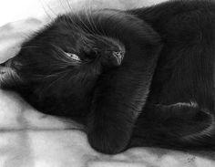 CAT - SCARLET • Pencil Drawing