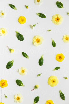Spring flower background by Ruth Black for Stocksy United