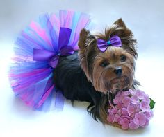 Bright Blue Purple and Pink Dog Tutu