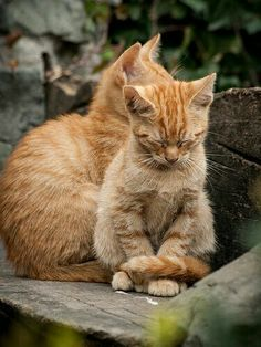 Rote Katzen haben was außergewöhnliches. ..