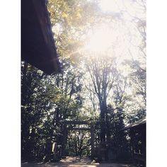 【i_am_kanoo】さんのInstagramをピンしています。 《#手向山八幡宮 から#高山八幡宮 へ。 ✱ ✱ 明日は#奈良 でブルーインパルスが飛ぶので 撮影中も上空を予行演習していました(^ ^) 森の中の鳥居がわからないほど幻想的❤︎ ✱ ✱ ✱ #家族写真#コズレ#木#生駒#nara#京都#大阪#神戸#関西#同行撮影#神社#着物#前撮り#七五三#ロケーションフォト#キッズフォト#photographer #ig_kidsphoto #ig_japan #ig_kids #ig_baby#写真好きな人と繋がりたい#カメラ好きな人と繋がりたい#ナチュラル#森#かわいい#かのお》