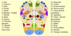 Foot Reflexology Diagram Free Reflexology Charts Points For Specific Ailments. Foot Reflexology Diagram 27 Always Up To Date Foot Reflexology Chart Fr. Reflexology Points, Foot Reflexology, Young Living Oils, Young Living Essential Oils, Underactive Thyroid, Mudras, Essential Oil Uses, Doterra Essential Oils, Natural Healing