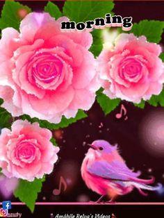 …╭)))✿╮ AMÁBILE CLUBE  ( ・◡・) DA AMIZADE _(_つ/ ̄ ̄/ MENSAGENS &   \/__/ CANÇÕES❗ Love Rose Flower, Pretty Flowers, White Flowers, Pink Roses, Beautiful Gif, Beautiful Roses, Beautiful Gardens, Beau Gif, Red Rose Bouquet
