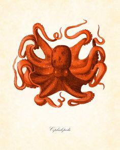 prints of kangaroo - natural history | Vintage Red Octopus Natural History Art Print by BelleMerGraphics, $10 ...