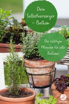 Balkon: Pflanzen & Ideen Self-catering balcony: which plant for which balcony? Growing vegetables on Balcony Plants, Balcony Garden, Diy Herb Garden, Vegetable Garden, Growing Herbs, Growing Vegetables, Culture D'herbes, Hanging Herbs, Herb Planters