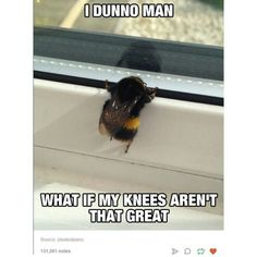 Funny pictures about The Bee's Knees. Oh, and cool pics about The Bee's Knees. Also, The Bee's Knees photos. Animal Memes, Funny Animals, Cute Animals, Animal Funnies, Animal Captions, Baby Animals, Funny Cute, The Funny, Funny Happy