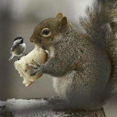 .I like bread, you like nuts, give it up
